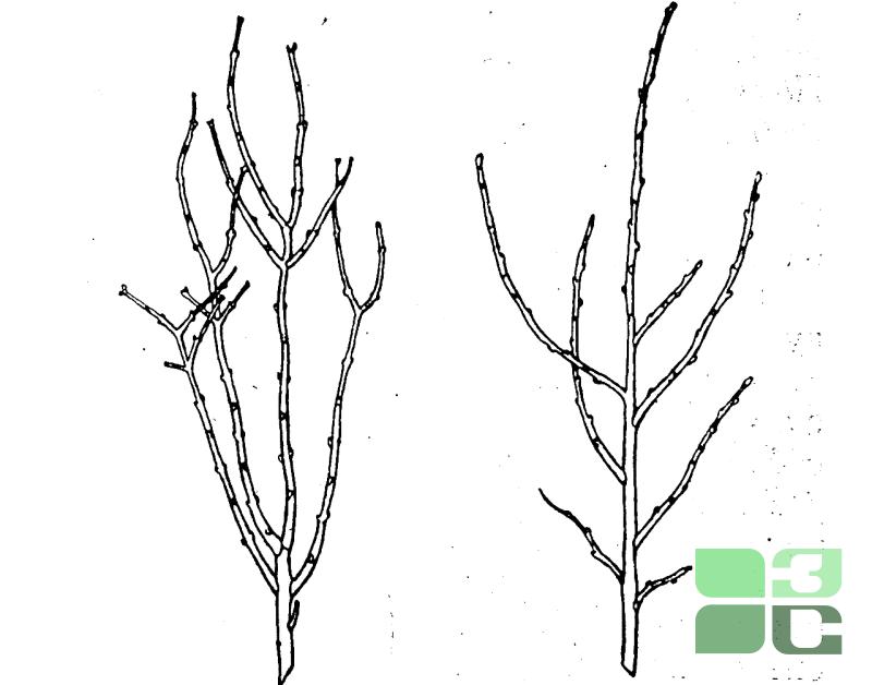 Обрезка растений. Как правильно обрезать растения